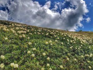 Сванетия. Альпийские луга
