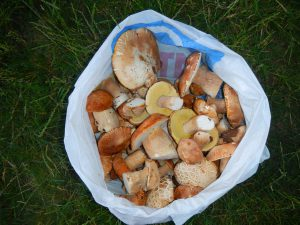 Походы Крым. Белые грибы