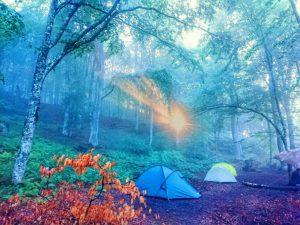 Рассвет в буковом лесу
