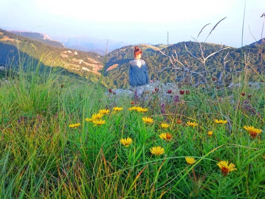 Цветы в горах Крыма