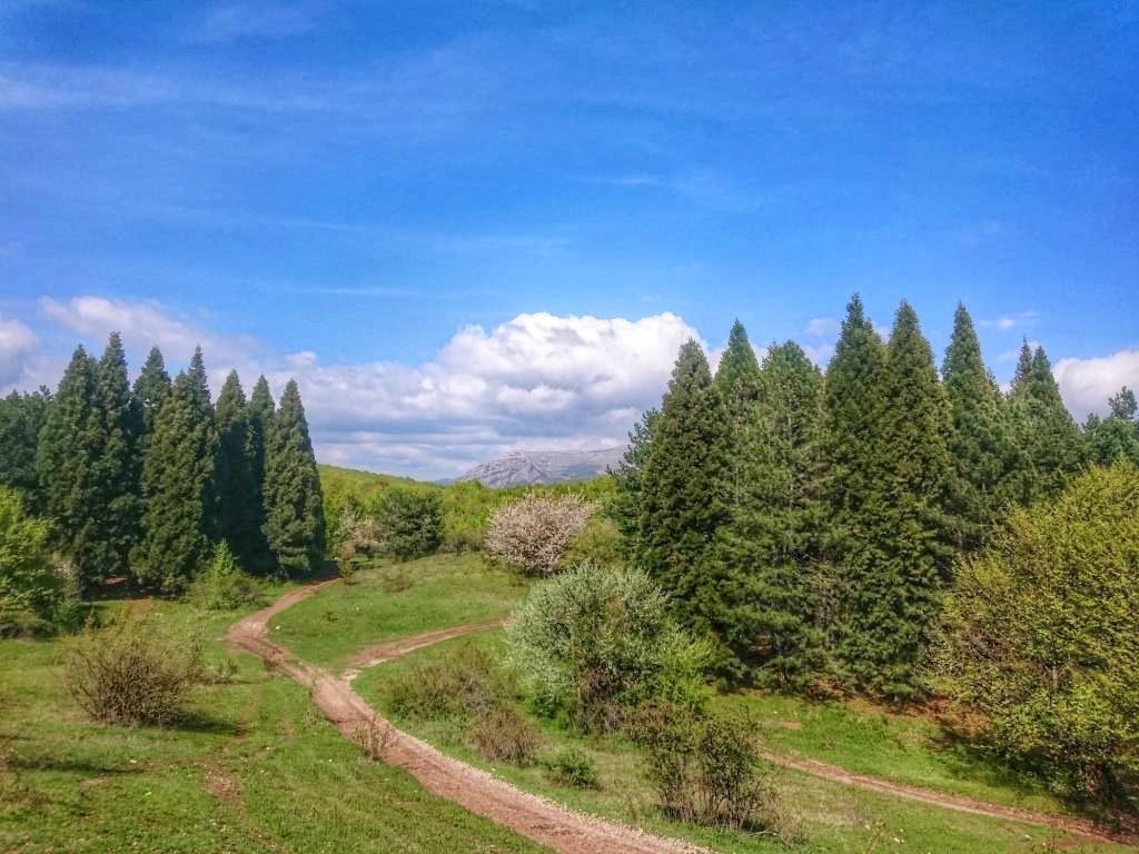 Роща секвой в Крыму