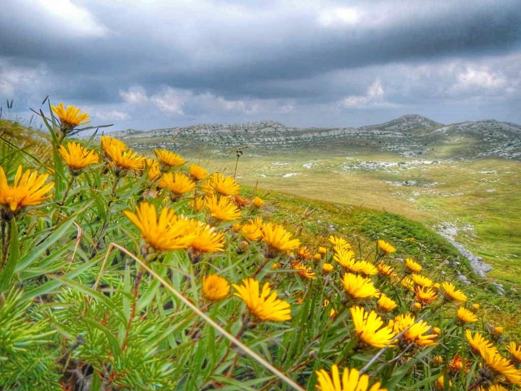 Альпийские луга в Крыму