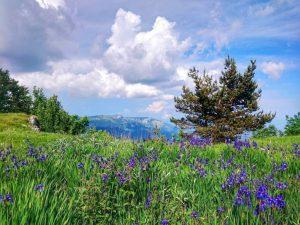 Ирисы в горах Крыма