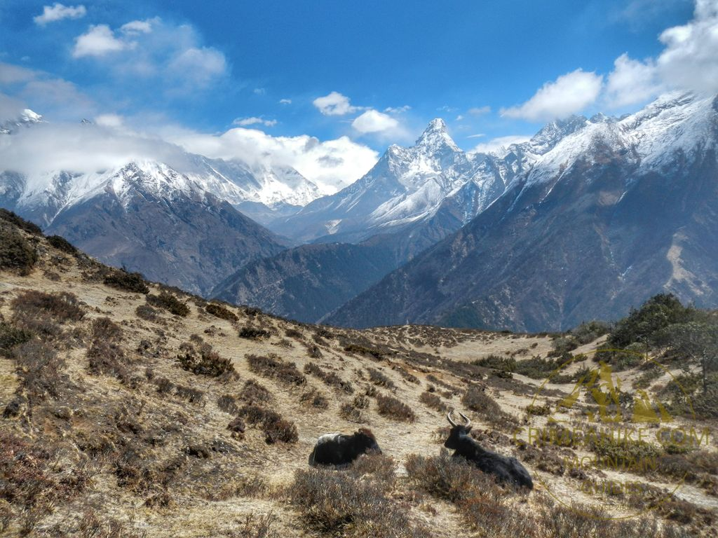 Дикие яки на фоне горы Ама-Даблам